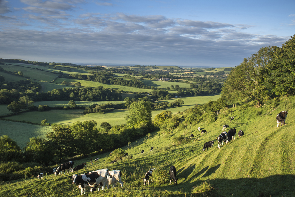 Early midsummer morning on Rawlsbury Hill, Dorset